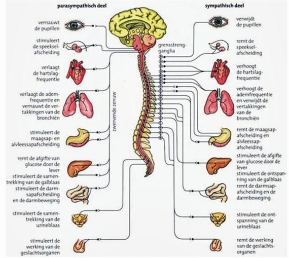 Segmentale therapie